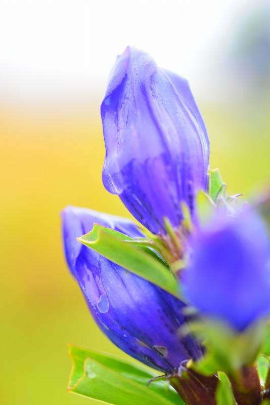 雨の日の秋の花