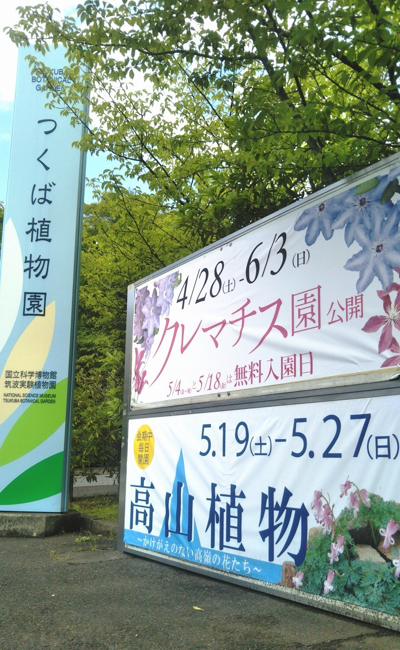 国立科学博物館 筑波実験植物園で、高山植物の展示が開催されています!