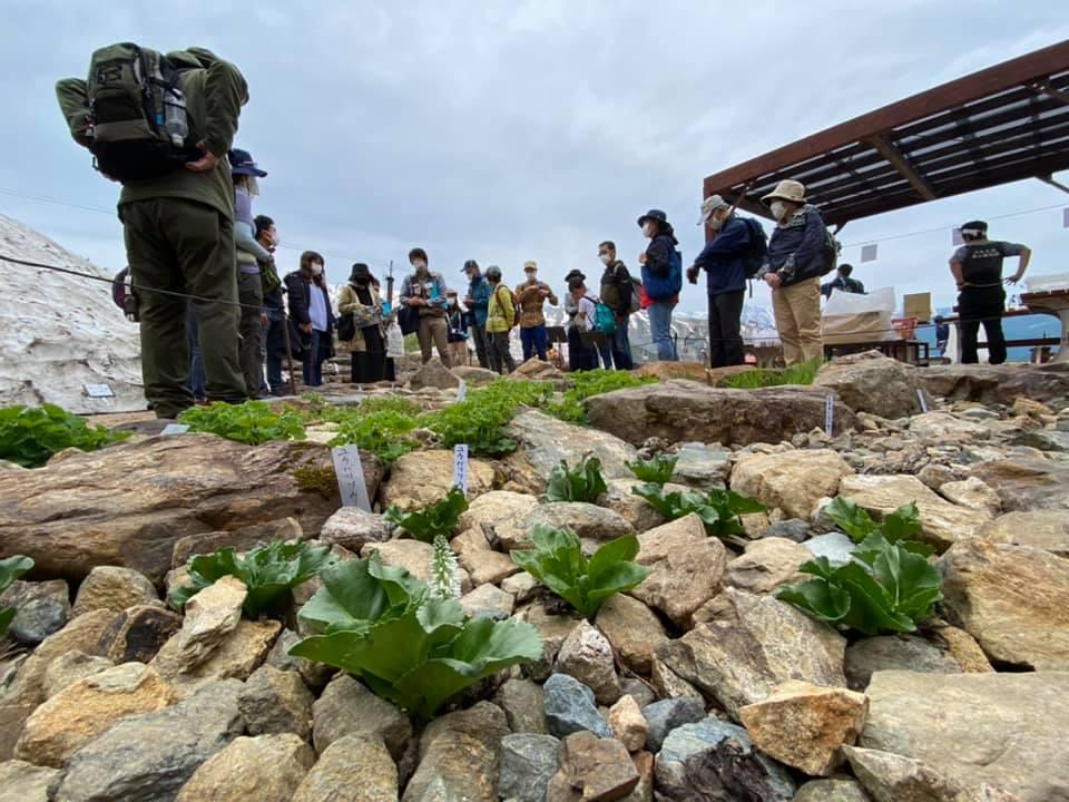 [終了] 学芸員とまわる植物園散策ツアー「ヒマラヤの青いケシとコマクサ大群落をめぐる」